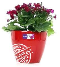 گلدان پلاستیکی گلباران