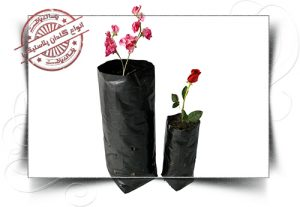 گلدان پلاستیکی نهال